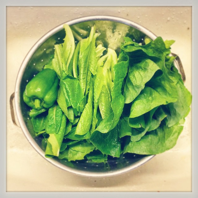 First Fresh Garden Greens
