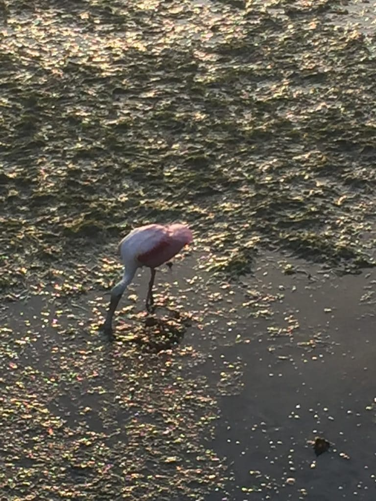 summer vacation to tampa florida spoonbill clearwater